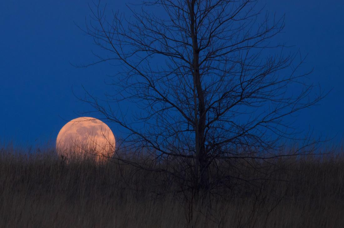 Old Moon or Wolf Moon