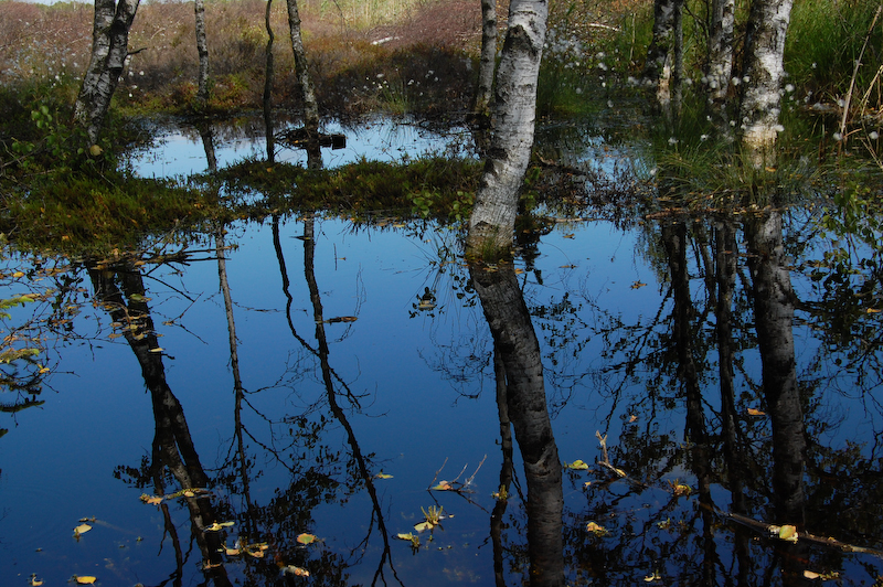 Natur-genopretning i Portlandmosen