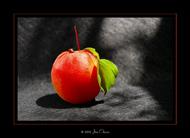 Apricot studio