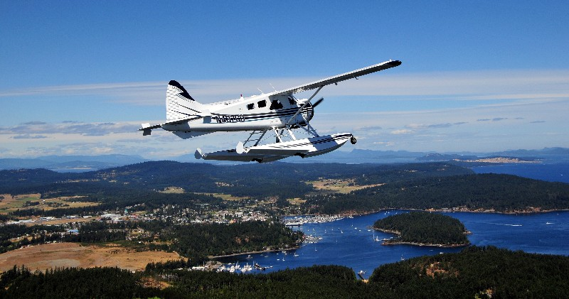 Beaver over Friday Harbor