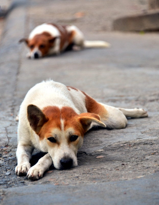 we are resting, Hoi An, Vietnam