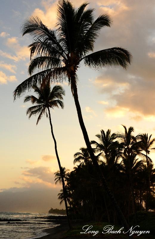 tropical paradise, Big Island, Hawaii