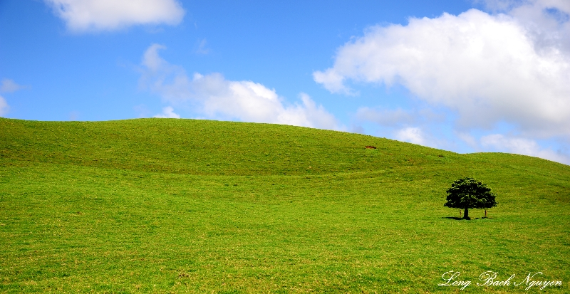 green field and blue sky, Kohala Mountain, Big Island, Hawaii