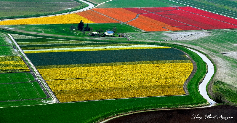 life as tulip  farmer, La Conner, Washington