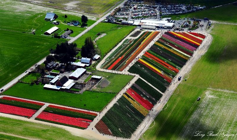 Tulip Town, Garden Center, Mt Vernon, WA