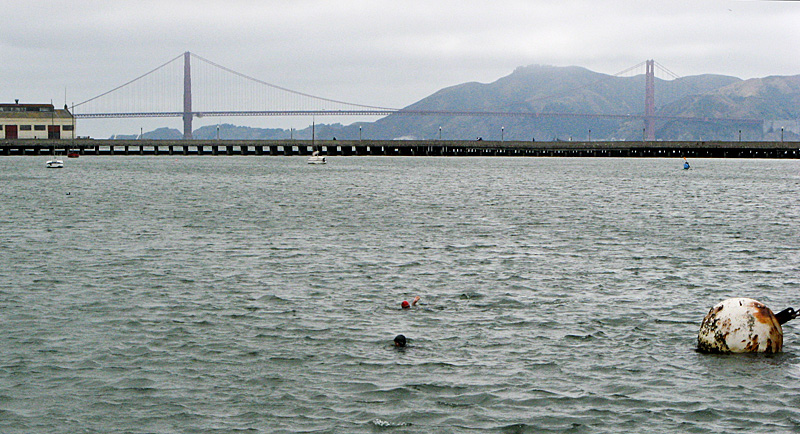 Bay swimmers, and Golden Gate Bridge