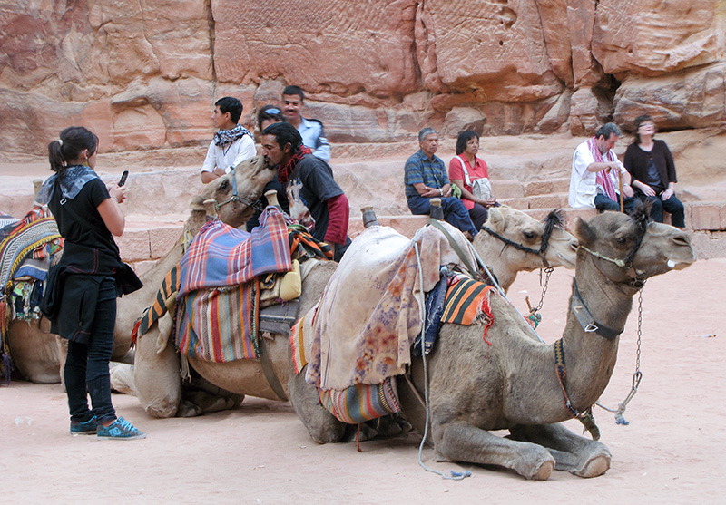 Plaza camels are the kissing kind.  (Used full 20x zoom.)