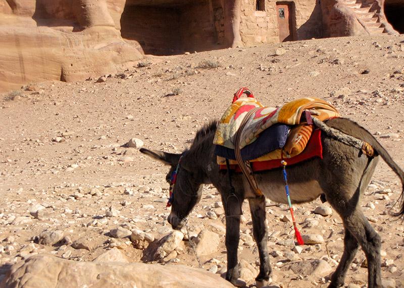 A burro in his Petra surroundings