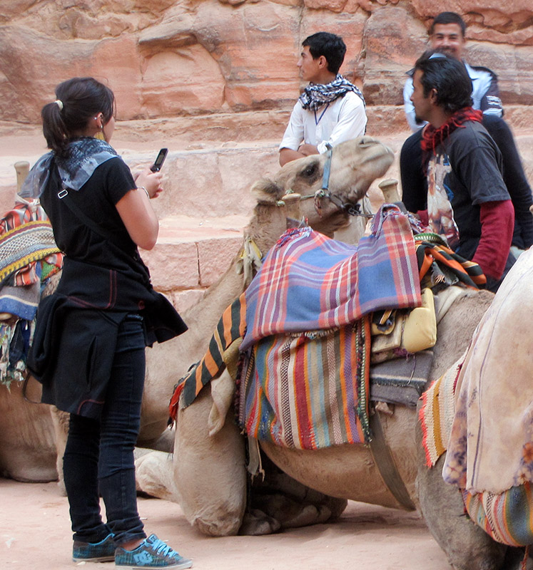 Affectionate camel, closer up