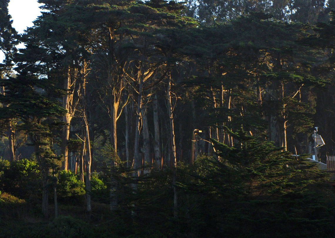 Tree area way above. 2033r