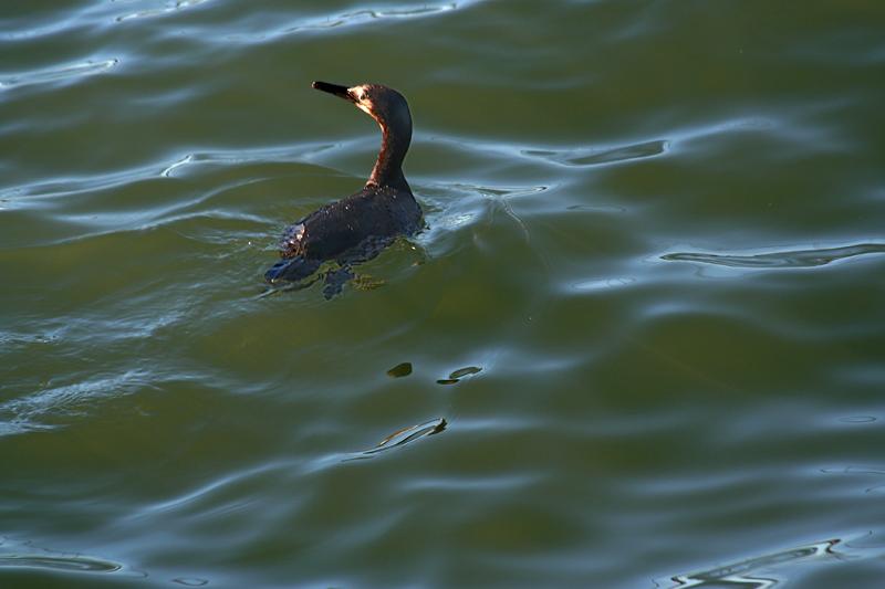 Floating but alert - Crissy Field