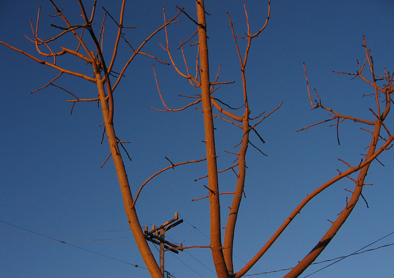 Wood, lines, limbs, and sky