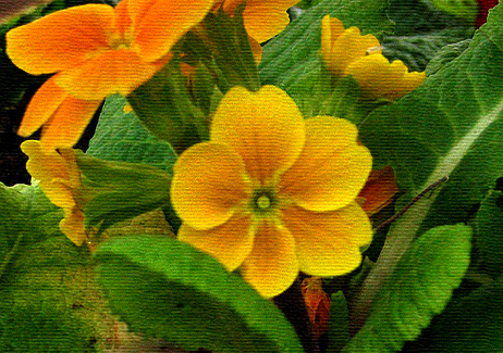Flowers via canvas screen