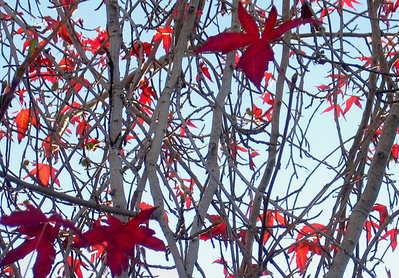 January red