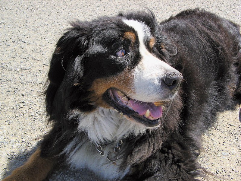 Timber, a very sweet dog