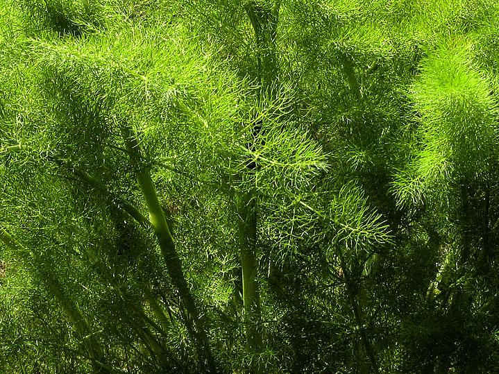 Beautiful foliage along the path