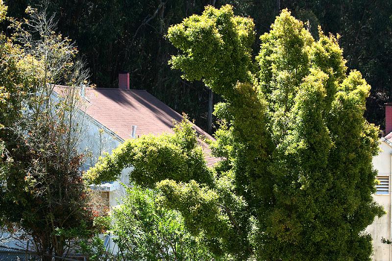 Woodsy scene with odd-galaxy-shaped tree
