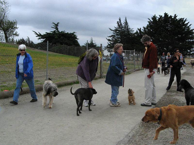 Point Isabel dog parks very busy on Sunday.