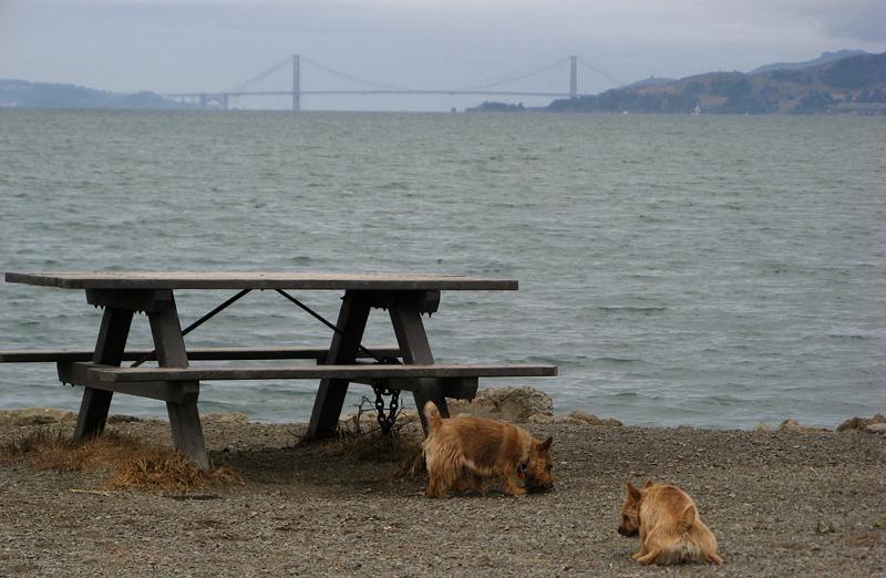 Twerps by bench and not-Golden Gate Bridge