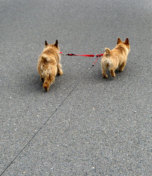 Tucker & Maggie. Some areas of the park require leashes