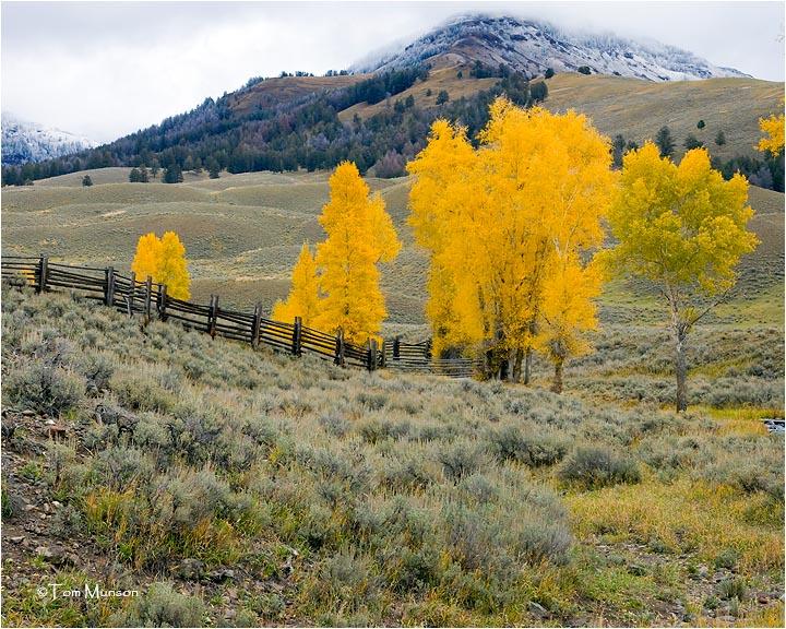 Yellowstone N. P.