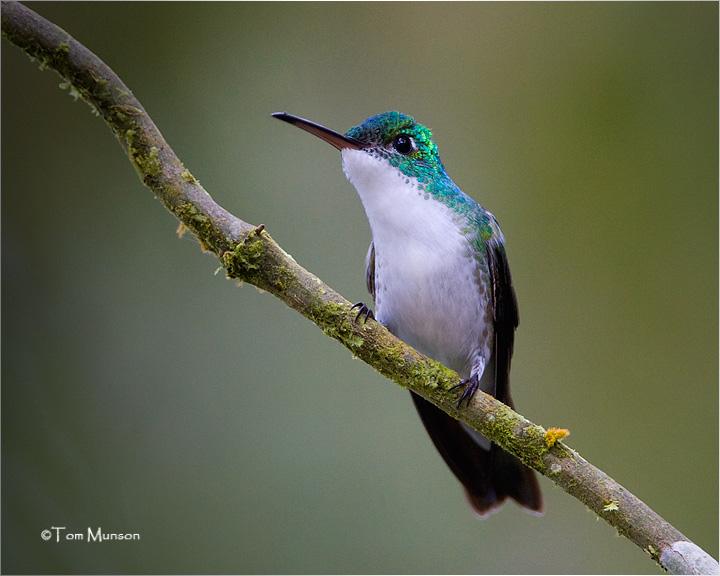 Andean-Emerald