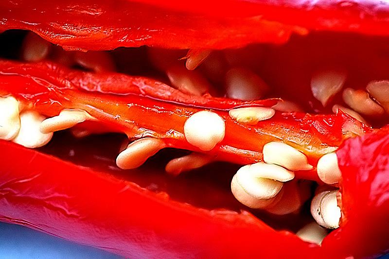 Inside a chilli