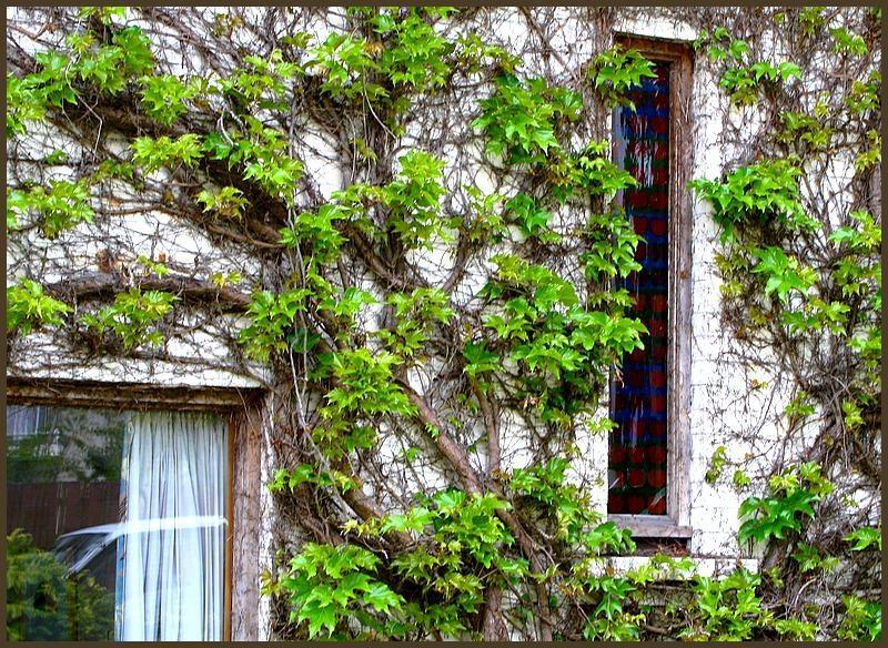 Ivy House.jpg