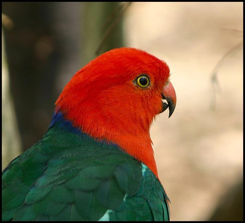 Pretty Red Head.jpg