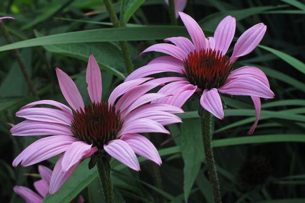 Springton Manor Flower Gardens (29)