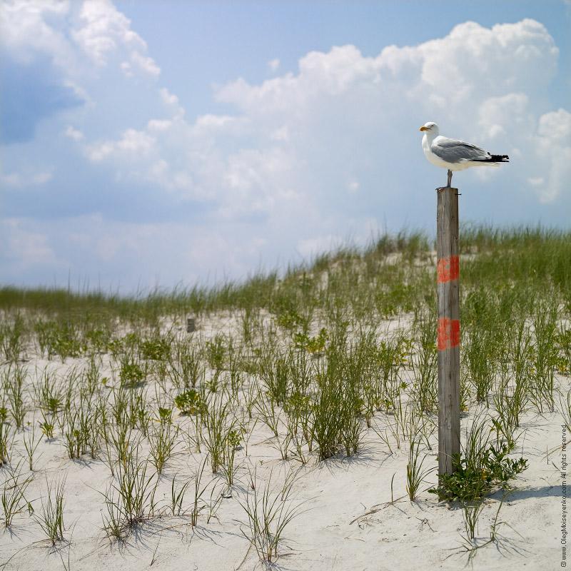 $200 - Guarding the Beach