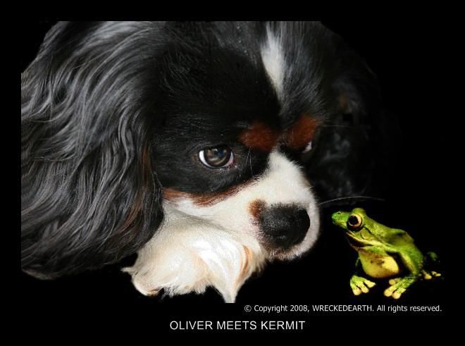 oliver meets kermit.jpg