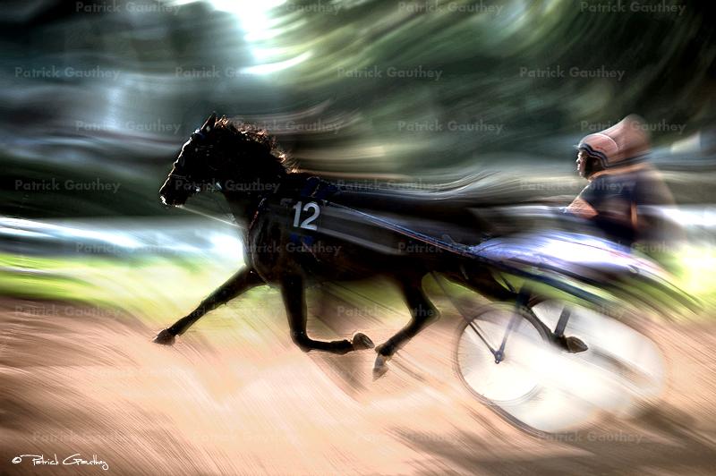 course chevaux 30941.jpg
