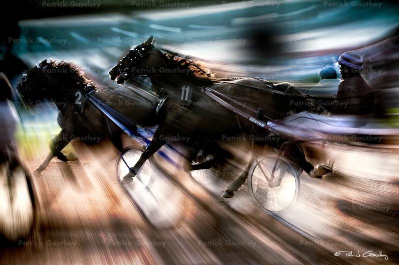 horses 30945.jpg