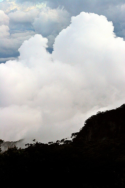 Clouds over Montane Forest