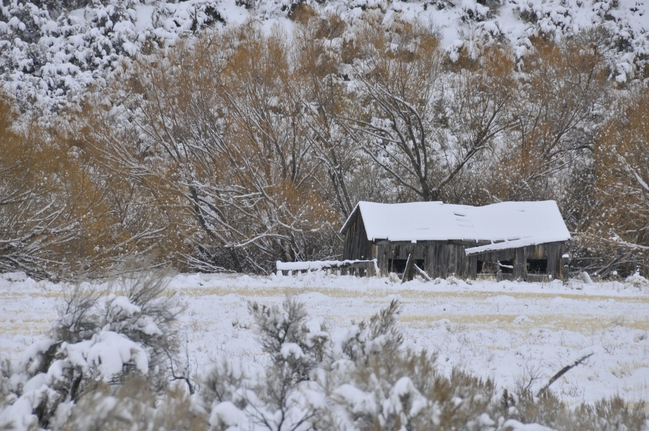 Snow Scene from Pocatello Creek Road _DSC9699.jpg