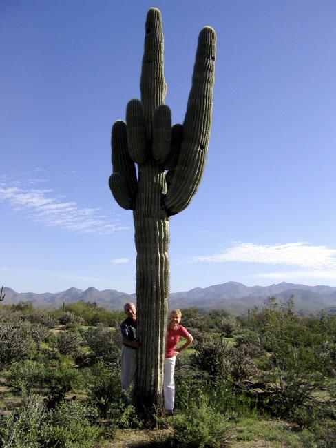 Sheris cactus.jpg