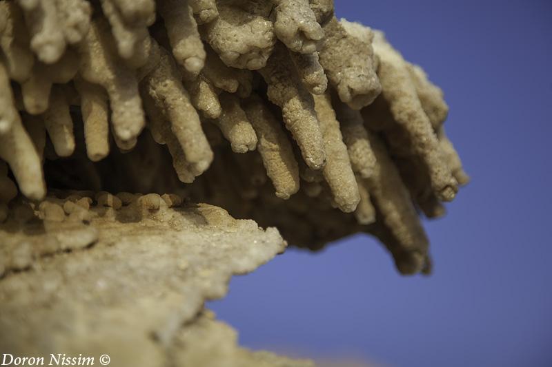 IMG_9456 - Salt stalactites