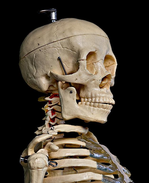 Portrait of a skull.