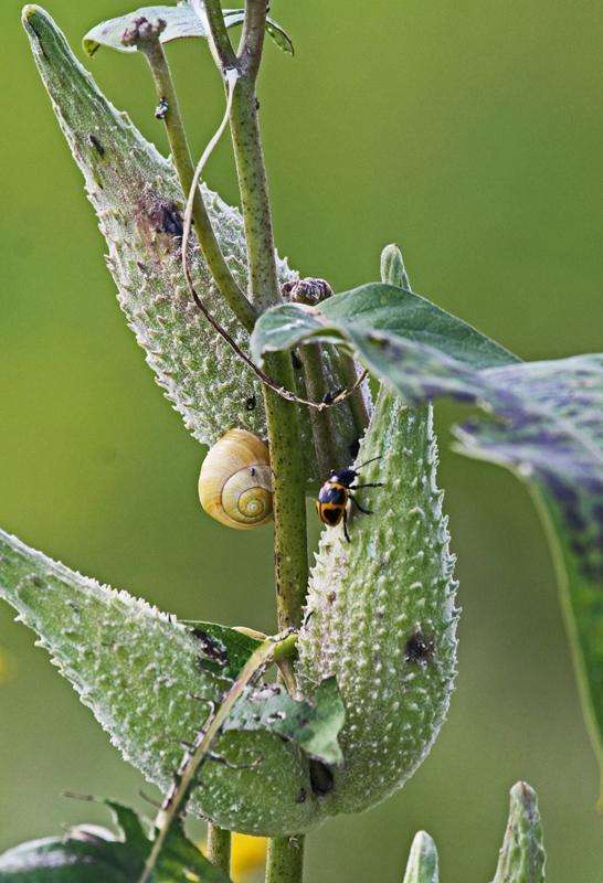 2013 05 Sep_martin-p_0015_plante-insectes-800.jpg