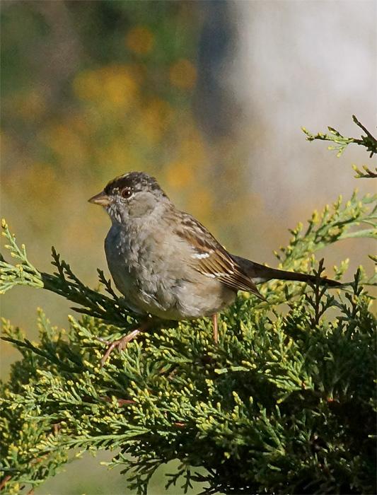 Bird 3A.jpg