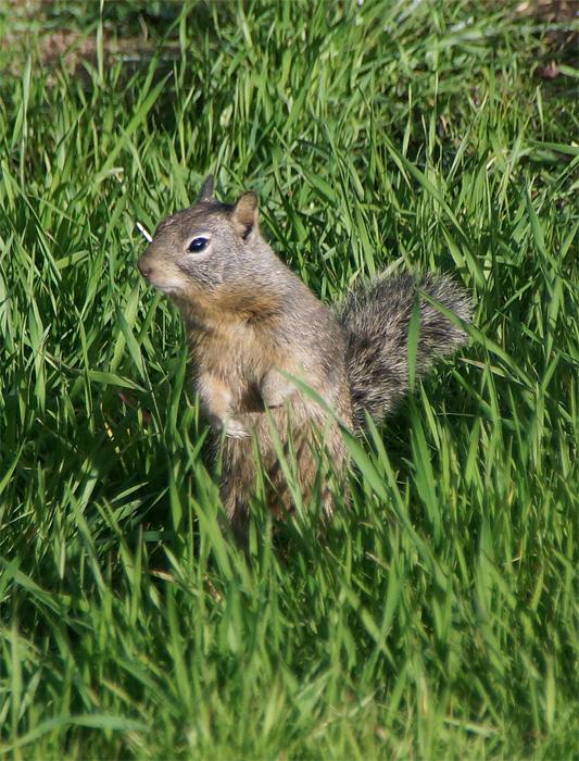 Squirrel 1A.jpg