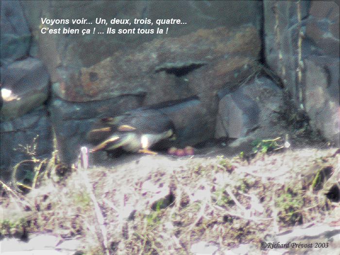 1-La femelle et les oeufs.jpg