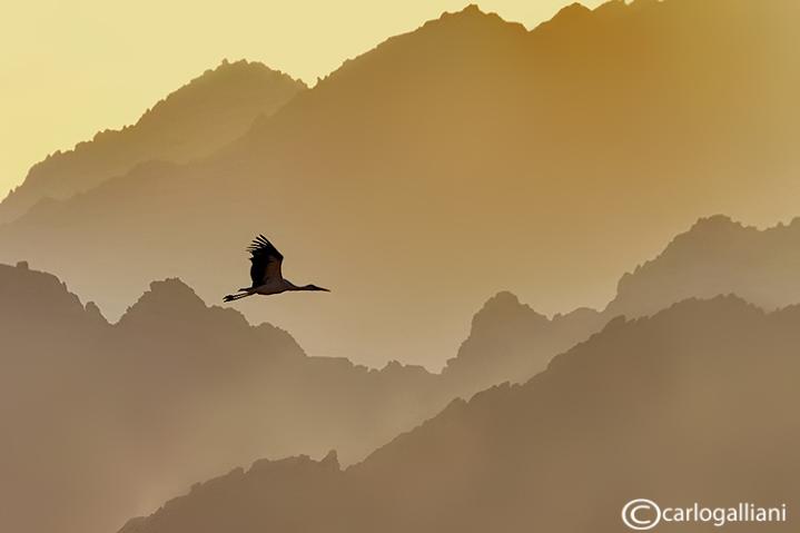 Stork in desert