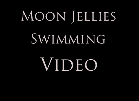 Moon Jelly Video