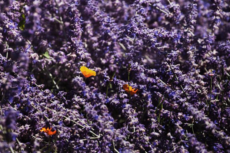 Orange in purple