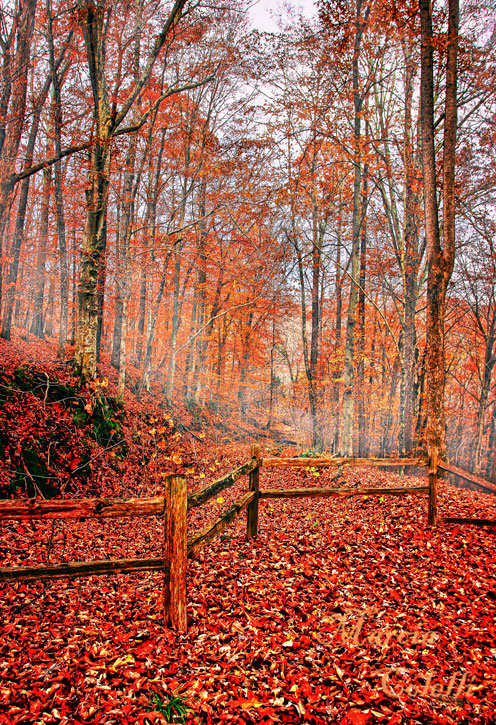 AUTUMN IN THE WOODS_8156.jpg
