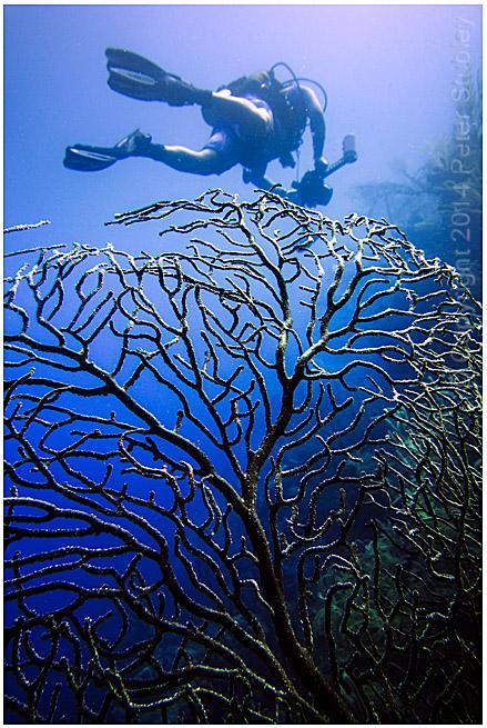 Branching coral.