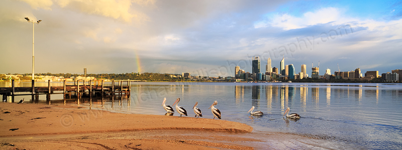 Pelicans by the Swan River at Sunrise, 22nd September 2014