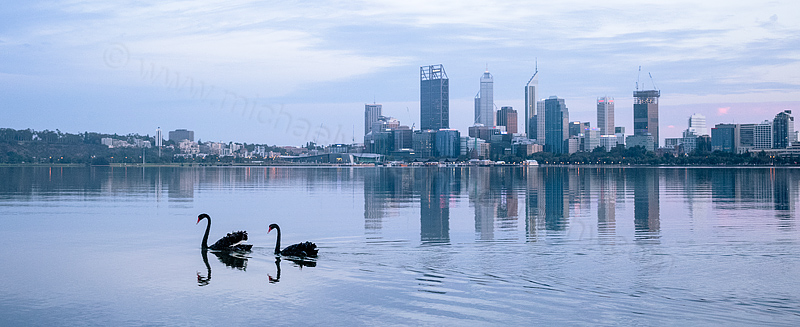 Black Swans on the Swan River at Sunrise, 18th February 2015
